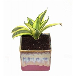 MILT in English Purple Ceramic Pot