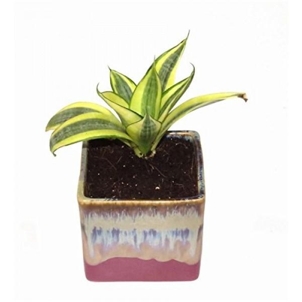 MILT in English Purple Ceramic Pot