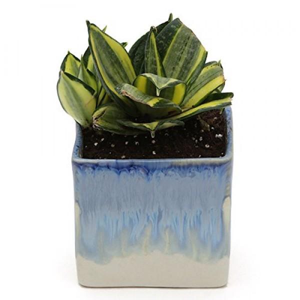 MILT in White & Blue Ceramic Pot